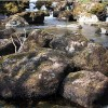 Cumbria Freshwater Biosecurity Plan